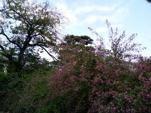 萩の花と秋の空
