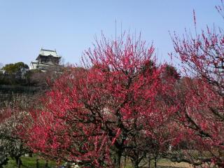 大阪城の梅林