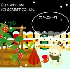 クリスマスツリーの種